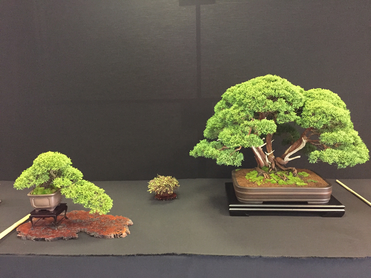 Show presentaion of Junipers and accent plant