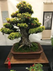 Heathrow Bonsai Show 2017
